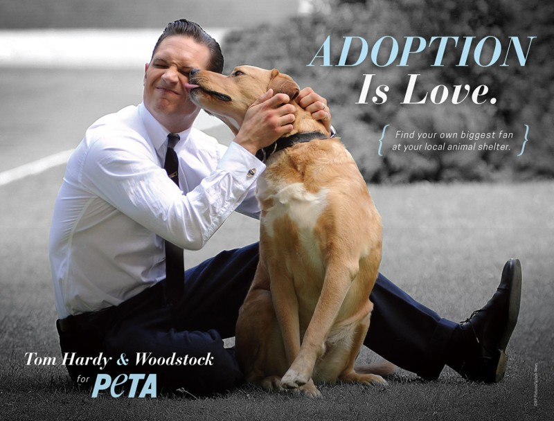 Tom-Hardy-Woodstock-PETA-Campaign-Picture-800x608